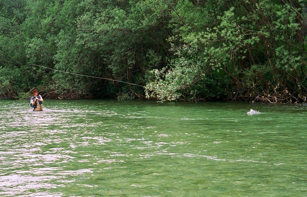 combat avec une grosse truite arc-en-ciel en Slovénie