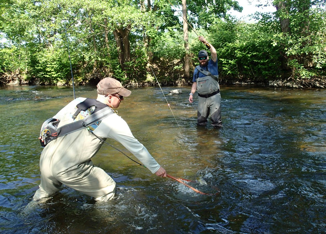 catching a nice brown trout on the no-kill course of the Bruche in Muhlbach sur Bruche