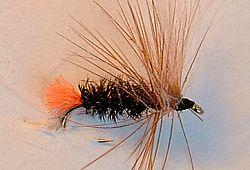 Terrestre Orange Tag (TOT), une très très bonne imitation de mouche commune (terrestre)