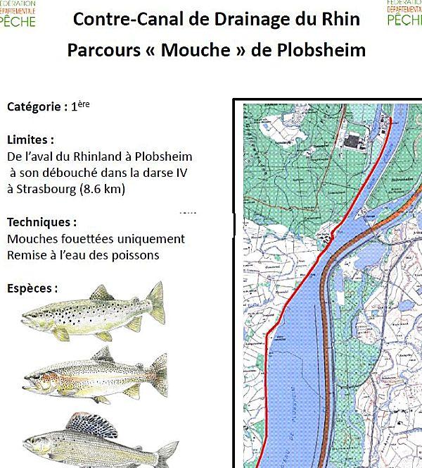 plan du parcours mouche du contre-canal de drainage à Plobsheim