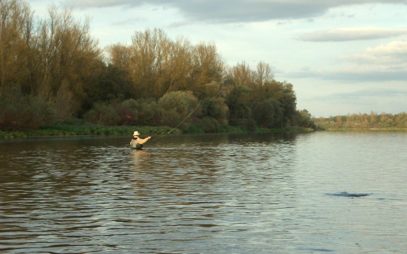 pêche à la mouche sur le vieux Rhin. Surveiller le niveau du fleuve est important pour votre sécurité