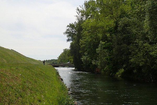une belle truite du contre-canal du Rhin